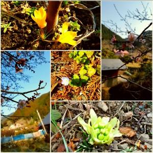 春 北川の写真