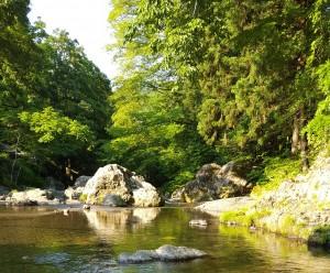 夕方の川 6月